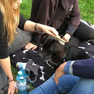 Therapiehund im Mädchenheim im Einsatz